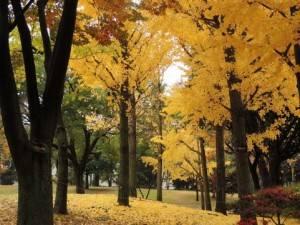 2.kouyou-ashinoko