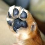 癒やし 犬 画像