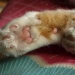 「かまって!」引き出しや棚に隠れる可愛い猫の画像や動画まとめ