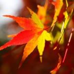 拝啓 紅葉の候とは? 時候の挨拶(10月上旬、中旬、下旬)ビジネス