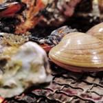 あさり ハマグリ マテ貝の潮干狩りの時期と採り方(取り方)のコツは?