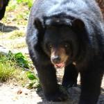 山道で熊と遭遇する確率は? マウンテンバイクや徒歩での登山