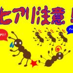 ヒアリに似ているアリを発見!? 画像で大きさや形などを比較!